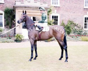 Scintillate with Pat Eddery (696-02)